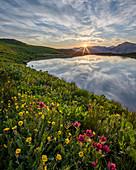 Sonnenaufgang hinter rosaroten Indianerpinseln (Castilleja rhexifolia) und Berg-Nelkenwurz (Acomastylis rossii turbinata), San Juan National Forest, Colorado, Vereinigte Staaten von Amerika, Nordamerika
