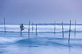 Stilt fisherman, Mirissa, Sri Lanka, Asia