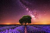 Milky Way over a lavender field in Guadalajara province, Spain, Europe