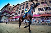 Pferd und Jockey, Piazza del Campo, Siena Palio, Siena, Toskana, Italien, Europa