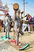 Sadhus performing a ceremony, Allahabad Kumbh Mela, largest religious gathering, Allahabad, Uttar Pradesh, India, Asia