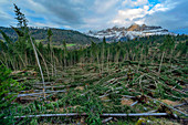 Forest damage, with wind throws caused by the storm Vaia on October 29, 2018 in Eggental, Karer Pass, South Tyrol, Italy