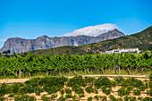 Neil Ellis Winery, Stellenbosch, Cape Winelands, South Africa, Africa