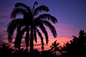 Palm trees silhouette in the sunset, Cayo Guillermo, Cuba