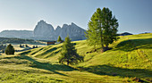 Sassolungo, Alpe di Siusi, South Tyrol, Italy