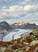 Aletsch glacier near Bettmeralp, Wannenhorn, Valais, Switzerland