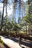 Child runs a hiking trail in Yosemite Park. California, United States.