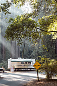 Camping carts on the Big Basin Redwoods Campground. California, United States.