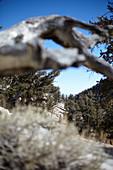 Blick durch einen Baumstamm auf die Landschaft beim Ancient Bristlecone Pine Forest, White Mountains, Kalifornien, USA\n