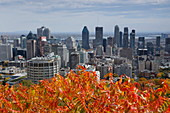 View of Montreal from Mont Royal, Quebec, Canada