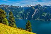 Blick auf den Vierwaldstätter See und die Glarner und Urner Alpen, Kanton Uri, Schweiz