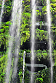 Waterfalls and tropical vegetation in the halls of Gardens by the Bay, Singapore
