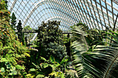 Lush, tropical vegetation in the hall of Gardens by the Bay, Singapore