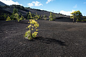 Volcano landscape at Llanos del Jable, La Palma, Canary Islands, Spain, Europe