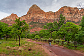 Enjoying the view in Zion National Park, Utah, United States of America, North America