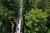 Tree top path, Allgäu Skywalk, Scheidegg, Allgäu, Swabia, Bavaria, Germany