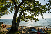 Beach and old oak, at Unteruhldingen, Lake Constance, Baden-Württemberg, Germany