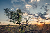 Single tree in Purnululu National Park, Bungle Bungle, Kimberley Region, Western Australia, Oceania,