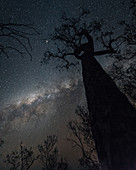 Night sky at Edith Falls in Northeastern Australia, Kathrine, Northern Territory, Outback, Australia, Oceania