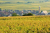 France, Haut Rhin, Route des Vins d'Alsace (Route of the wines of Alsace region), Bennwihr, vineyard and general view of the village