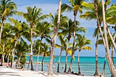 France, Guadeloupe (French West Indies), Grande Terre, Saint François, Lagon beach