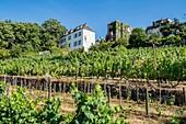 Frankreich, Paris, kleiner Weinberg von Montmartre, offizieller Name Vignes du Clos Montmartre, von der Rue des Saules aus gesehen