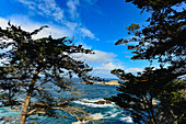View of pine trees and rocks in the Pacific Ocean on Highway 1, at Carmel-By-The-Sea, California, USA