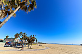 View of palm trees and the beach at Venice Beach, California, USA
