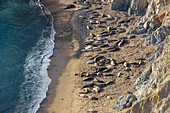 View from above of sealions basking on the narrow beach by sheer cliffs.