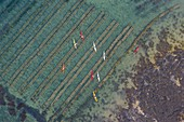 France, Morbihan, Gulf of Morbihan, kayaks above Petit Veizit oyster farm (aerial view)