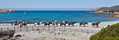 France, Corse du Sud, Sartenais region, Tizzano, silver beach and riders