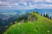 Summer meadow in the mountains of the Nagelfluhkette, Allgäu Oberstaufen