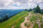 Hiking trail in the mountains of the Nagelfluhkette in summer, Allgäu Oberstaufen