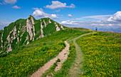 Wanderer auf Wanderweg mit Blumen im Gebirge der Nagelfluhkette im Sommer, Allgäu, Oberstaufen, Bayern