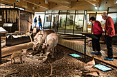 ANIMALS OF THE ARCTIC CIRCLE, MUSEUM OF SVALBARD, CITY OF LONGYEARBYEN, THE NORTHERNMOST CITY ON EARTH, SPITZBERG, SVALBARD, ARCTIC OCEAN, NORWAY