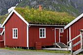 Traditionelle rote Holzhäuser mit begrüntem Dach zur Wärmedämmung, das Dorf Reine, Lofoten, Norwegen