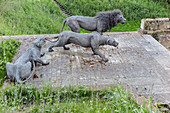 GALVANIZED WIRE SCULPTURES, LIONS BY KENDRA HASTE, MOAT OF THE TOWER OF LONDON, LONDON, GREAT BRITAIN, EUROPE