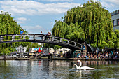 SWANS AND BRIDGE OVER REGENT'S CANAL, LONDON, GREAT BRITAIN, EUROPE