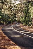 Road in Boranup Forest in Margaret River, Western Australia, Australia, Oceania