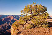 Grand Canyon Nationalpark, South Rim, Arizona, USA