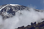 Ascent of Kilimanjaro on the Machame route; fifth stage between Barafu and Karanga Camp; summit