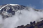 Besteigung des Kilimandscharo auf der Machame Route, fünfte Etappe zwischen Barafu und Karanga Camp, Gipfel