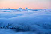 View from the Feldberg into a sea of fog and the Swiss Alps, Southern Black Forest, Black Forest, Baden-Wuerttemberg, Germany, Europe