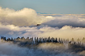 View from the Feldberg to a sea of fog, Southern Black Forest, Black Forest, Baden-Wuerttemberg, Germany, Europe