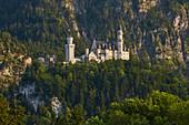 View of Neuschwanstein Castle, Schwangau municipality, Ammer Mountains, Ostallg? U, Bavaria, Germany, Europe