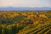View over vineyards and Rhine forest to Sponeck Castle, Vosges, Kaiserstuhl, Baden-W? Rttemberg, Germany, Europe