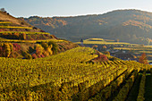 Blick auf Altvogtsburg und umgebende Weinberge, Vogtsburg, Badberge, Kaiserstuhl, Baden-Württemberg, Deutschland, Europa