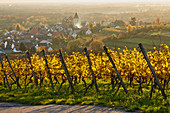 View of Burkheim in vineyards, Kaiserstuhl, Baden-Württemberg, Germany, Europe