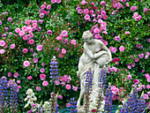 Climbing roses and statue in country garden Norfolk