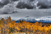Grand Teton Mountains and Autumn (Fall) colour\nGrand Tetons National Park\nWyoming. USA\nLA006533